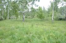 Obr. 2. Strukturně bohatý střední les s přístupem světla do všec